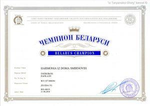 Папильон гармония, Чемпион Беларуси