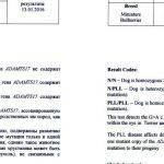 Результат теста на PLL miniature bullterrier result test PLL