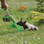 Миниатюрный бультерьер, минибуль, Миники, бультерьер, питомник булей, miniature bull terrier, minibull, bullterrier, kennel minibulls
