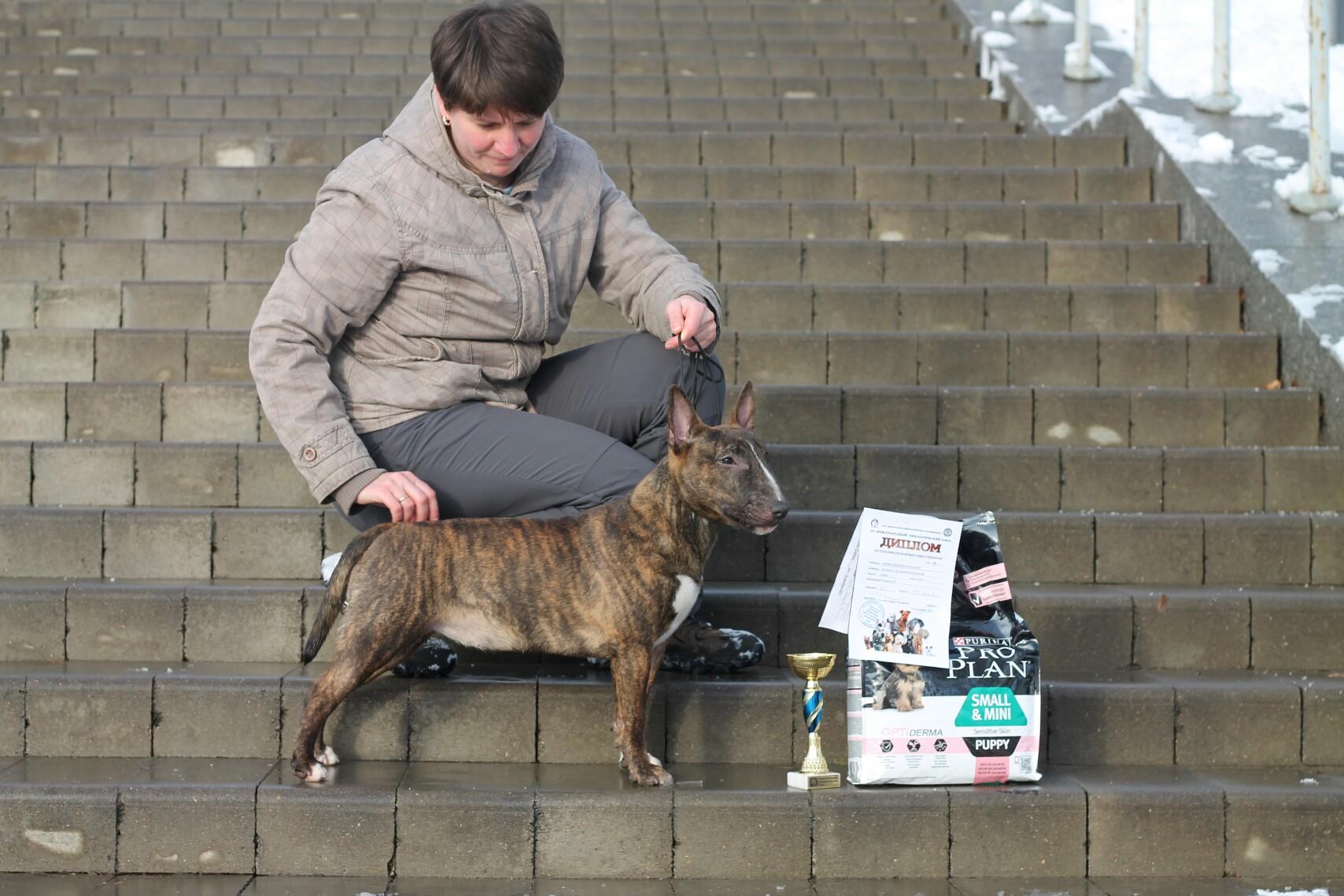 Miniature bull terrier, mini bull, bull show, dogs show, bullterrier kennel, миниатюрный бультерьер, минибуль, щенки минибулей, питомник миниатюрных бультерьеров