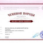 Сертификат Чемпиона Породы Папильона Весна- Красна из Цнянской Охоты
