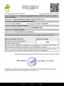 PKD1 (polycystic kidney disease 1)